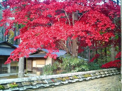 紅葉の古峰神社21