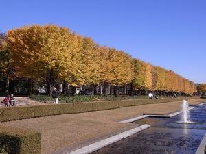 昭和記念公園整然と並ぶ立川口のイチョウ並木02