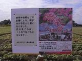赤花そば祭りポスターアップ