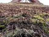 茅葺き屋根アップ2