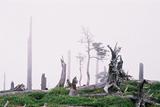 立ち枯れの森大台ケ原24