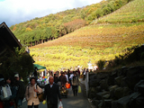ココワイン収穫祭200704