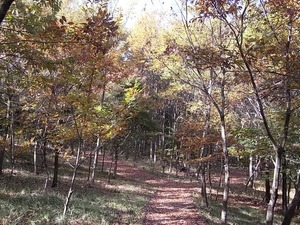 国営昭和記念公園の散策道