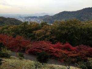 もみじ谷の紅葉と足利市街の遠景
