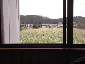 佐野ラーメン岳乃屋の裏のそば畑