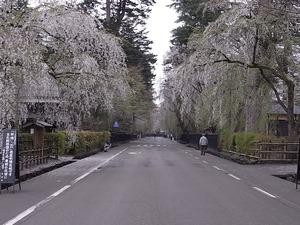 角館 しだれ桜の咲く早朝の武家屋敷を道路中央から見る