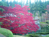 紅葉の古峰神社16