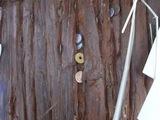 金の成る木3