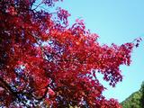 大芦渓谷の紅葉06