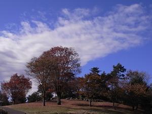 青空の国営昭和記念公園01