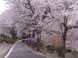 つがの里の桜並木