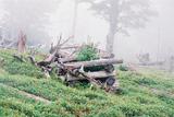 立ち枯れの森大台ケ原11
