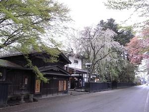 角館 しだれ桜のピークが過ぎてしまった朝の武家屋敷2