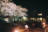 自由学園の夜桜7