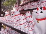 奉納された招き猫たち4