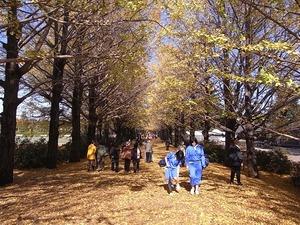 昭和記念公園うんどう広場近くのイチョウ並木04