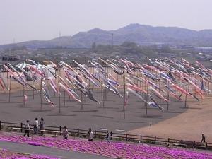 太田北部運動公園おおた芝桜まつり 鯉のぼり