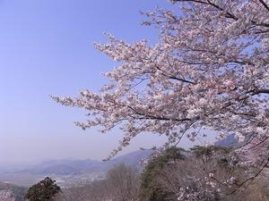 太平山謙信平から桜越しに遠景を望む1