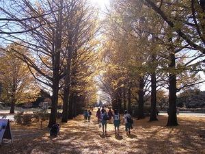 昭和記念公園うんどう広場近くのイチョウ並木03