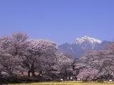 実相寺境内の外から桜を見る3