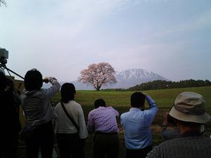 岩手山と小岩井農場一本桜をバックに撮影している観光客たち