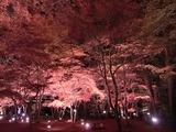 長瀞紅葉ライトアップ02