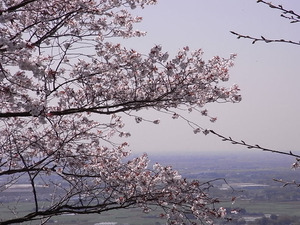 太平山 謙信平からの眺めと桜3