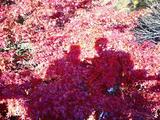 大芦渓谷の紅葉11