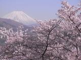 大法師公園から富士山を望む2