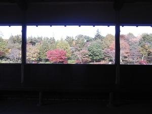 昭和記念公園の茶室風の建物と紅葉04