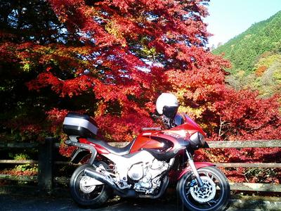 大芦渓谷の紅葉12