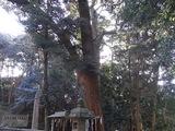 金の成る木2