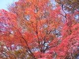 休憩所の紅葉3