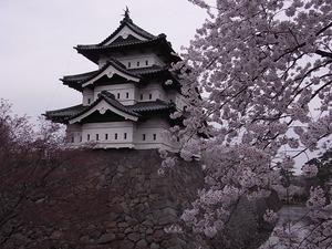 弘前城天守閣とお堀に咲く桜