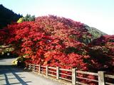 大芦渓谷の紅葉03
