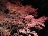長瀞紅葉ライトアップ09