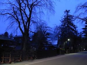 人通りも少ない日の暮れた角館武家屋敷通りと咲いていないしだれ桜1