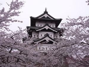 弘前城天守閣と満開の桜