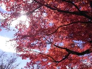 昭和記念公園日本庭園の紅葉02