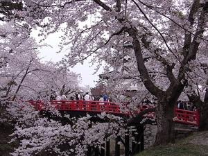 弘前城天守閣と石垣の風景を写真を撮ろうと大混雑してる下乗橋