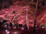 長瀞紅葉ライトアップ01