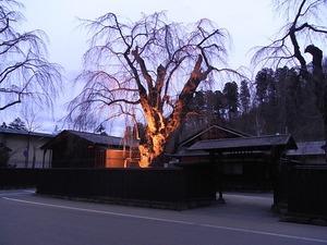 角館伝承館のしだれ桜ライトアップもまだ咲いていない状態を門の前から