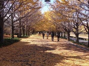 昭和記念公園対面のイチョウ並木