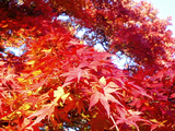 大芦渓谷の紅葉09