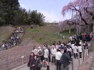 三春滝桜を撮ってる人たち2