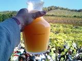 ココワイン収穫祭2007-3