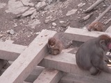 猿のお食事タイム3