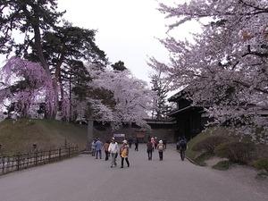 弘前城追手門と満開の桜