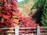 大芦渓谷の紅葉04