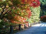 大芦渓谷の紅葉05